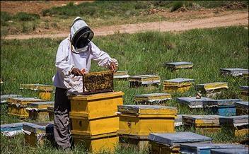 زنبورهای عسل گرفتار ریزگردها هستند