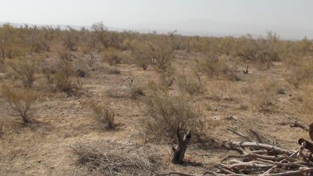 اجرای طرح جمع آوری بذر از درختان کویریِ در گناباد