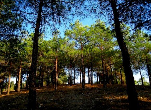 چه کسی مسئول سم پاشی درختان چیتگر در فصل گرماست؟